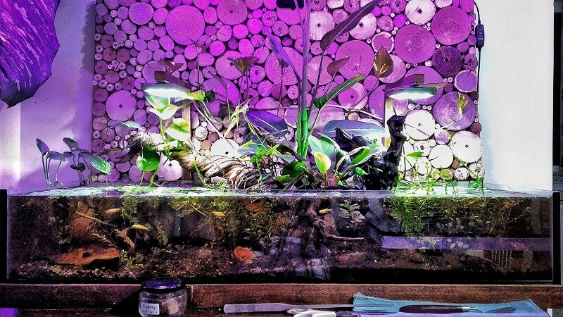 A Riparium in Combination with Walstad Method using a Shallow Tank Aquascaped by Arnel Perez Philippines