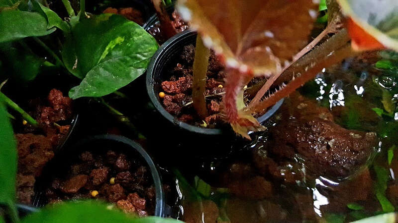 Another view of my plants in Aquaponics net pots