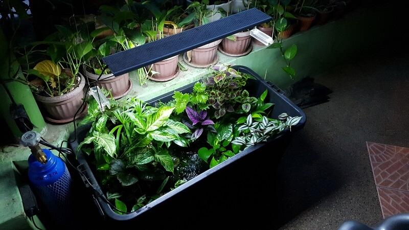 Aquaponics with Ornamental Plants
