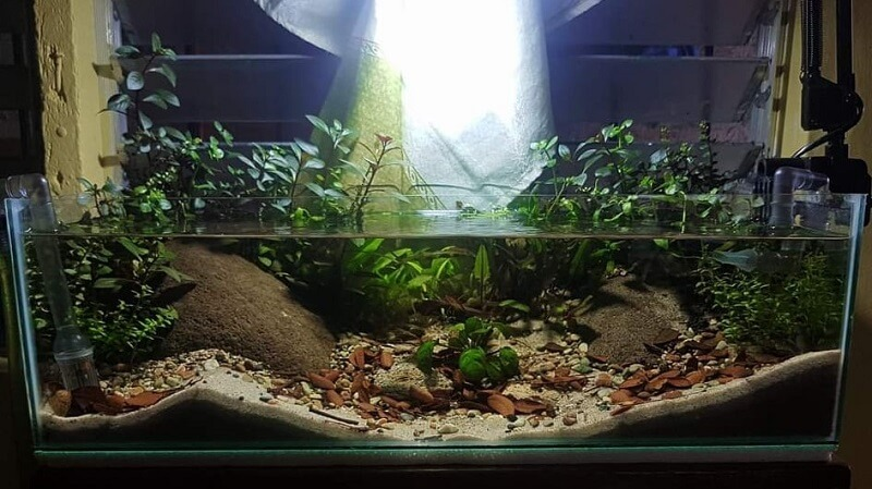 Can be Considered a Riparium using a Shallow Tank Aquascaped by Francis Albert Lagahid Philippines