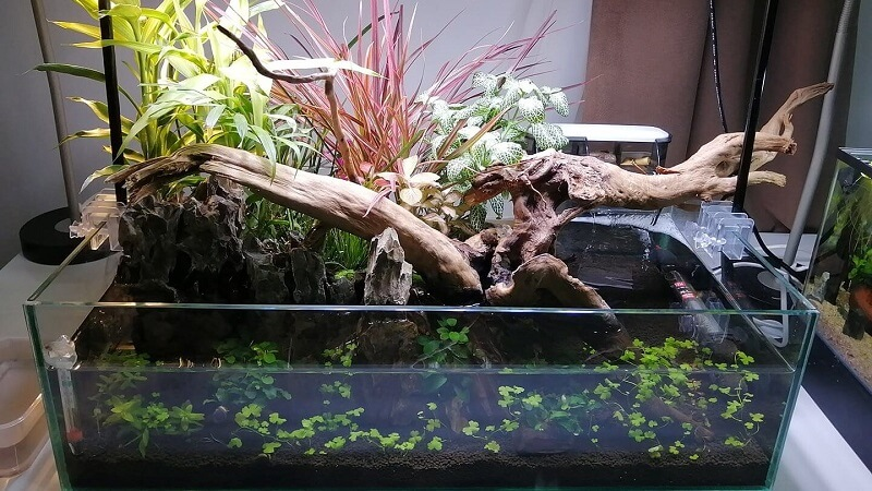 Can be Considered as a Riparium Aquascaped by Renier G. Javier Philippines