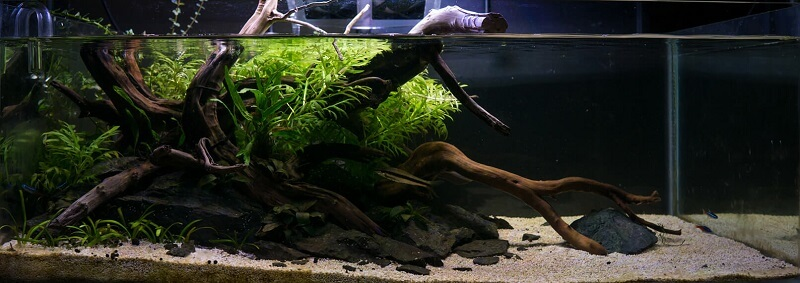 Can be Considered as a Riparium using a Shallow Tank Aquascaped by IG @neiascapes Philippines