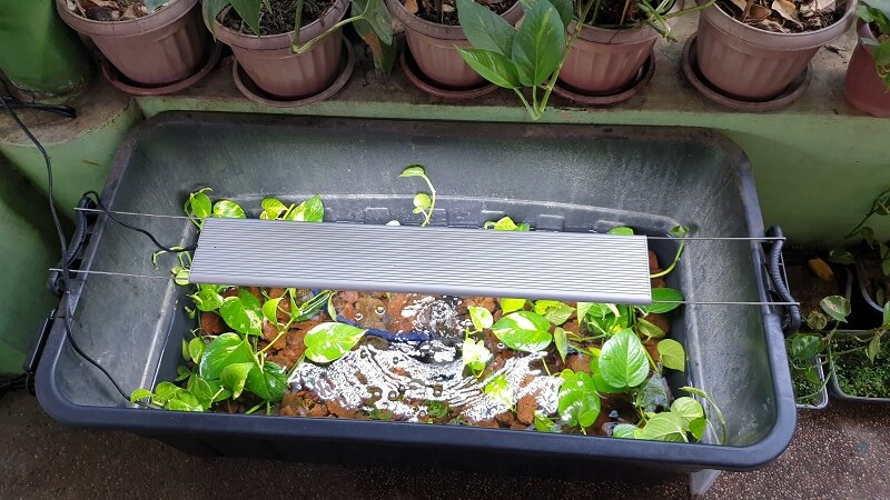 I used Lava rocks to Establish the Shallow Depths in my Riparium - Testing the trimmings of my Wife's Pothos