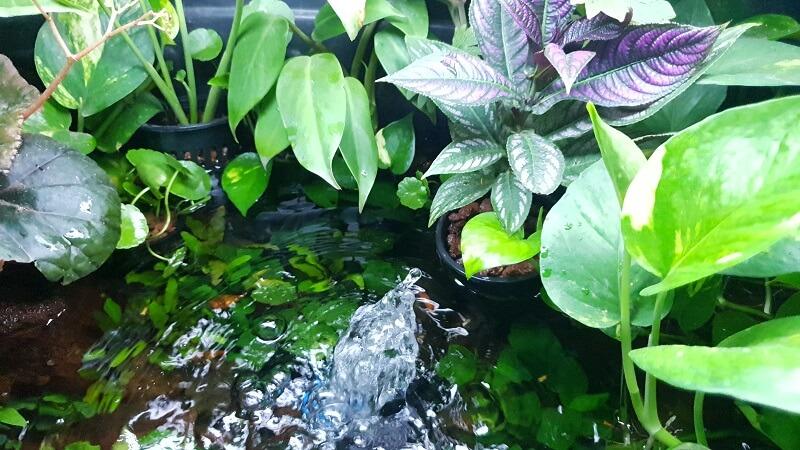 Providing Water Aeration in my Riparium