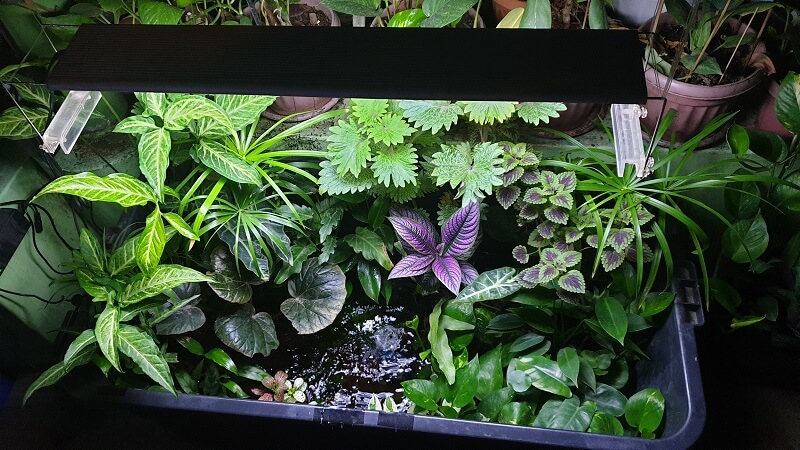 This is my Riparium After About 4 Months - you can still see my Persian Shield, Coleus and Fittonias in here